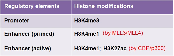 Histone modifications at enhancers