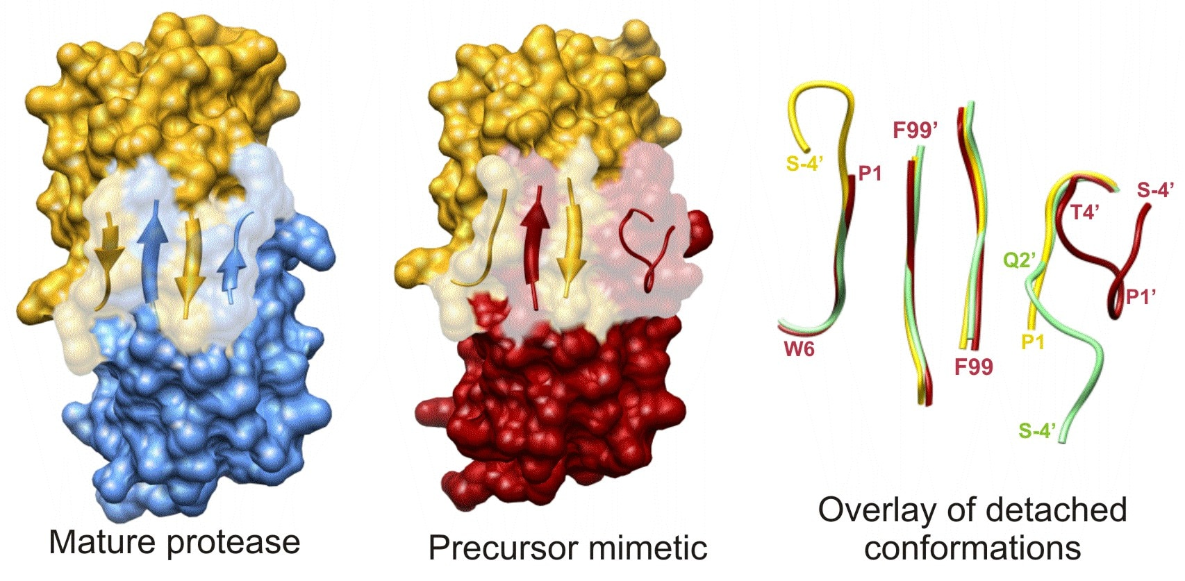Terminal β-sheet dimer interface of PR precursor analogue