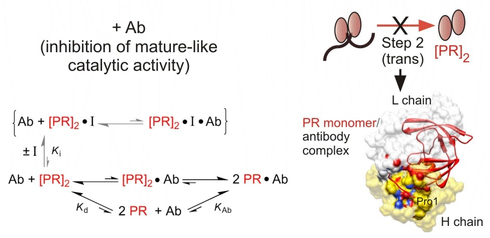 Dissociative inhibition of PR autoprocessing