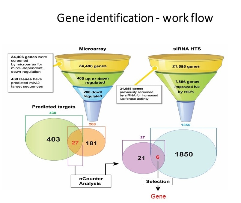 Work flow for identifying target gene of specific microRNA