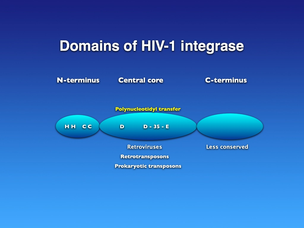 Domains of HIV-1 integrase
