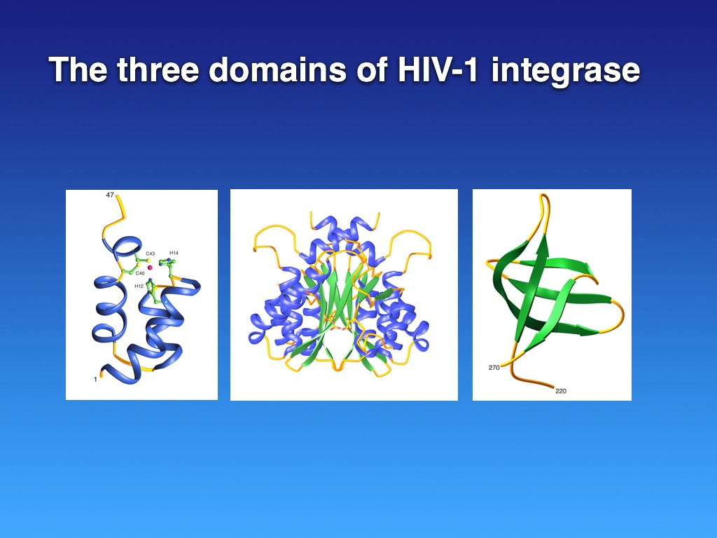 Structures of the individual domains of HIV-1 integrase