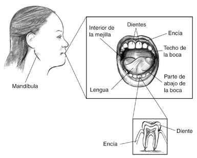 Drawing of the profile of a woman with a sign that points to the jaw.