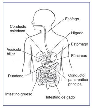 Colangiopancreatografa retrgrada endoscpica  NIDDK