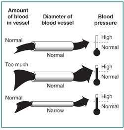 High Blood Pressure & Kidney Disease | NIDDK