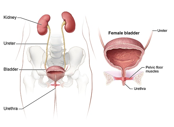 Symptoms & Causes of Bladder Control Problems (Urinary