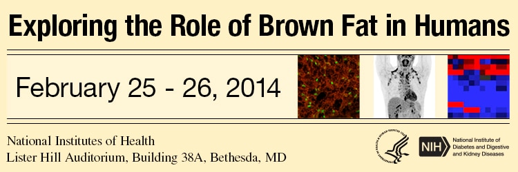 Banner for the 2014 Exploring the Role of Brown Fat in Humans Meeting.