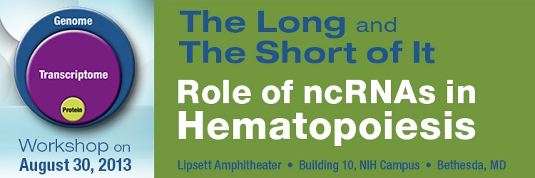 Banner for the 2013 Workshop on the Role of ncRNAs in Hematopoiesis