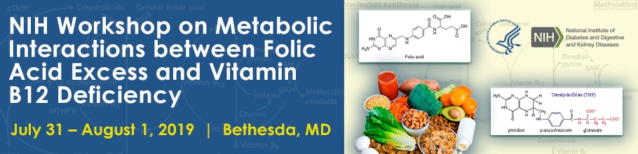 Workshop on Metabolic Interactions between Folic Acid Excess and Vitamin B12 Deficiency web banner