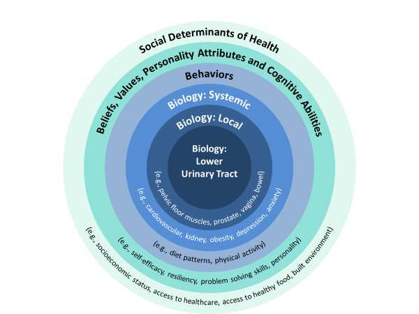 Depicting the various factors that affect urinary incontinence: Social Determinants of Health (e.g., socioeconomic status, etc.)