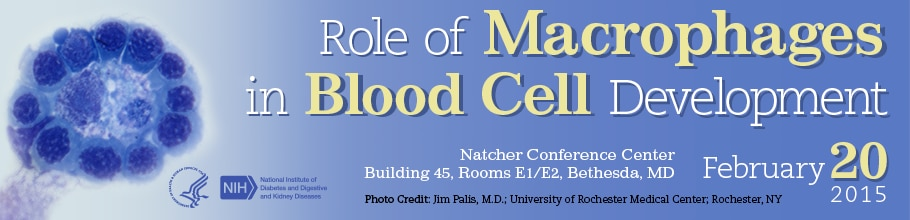 Banner for the 2015 Workshop on the Role of Macrophages in Blood Cell Development