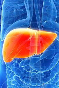 The liver performs many critical metabolic functions, including processing and distribution of nutrients. Liver diseases can be caused by infection, such as hepatitis B and C, or by genetic mutations. Other liver diseases can be triggered by autoimmune reactions or drug toxicity. The rise in obesity in the United States has led to a rise in nonalcoholic fatty liver disease. Many liver diseases place individuals at higher risk for developing liver cancer.