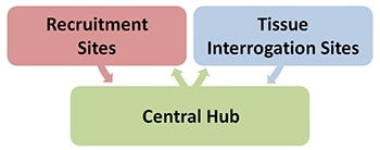 Recruitment sites and tissue interrogation sites separately feed into the central hub. The central hub feeds back into both.