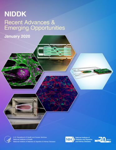 Cover image for NIDDK Recent Advances & Emerging Opportunities report for January 2020