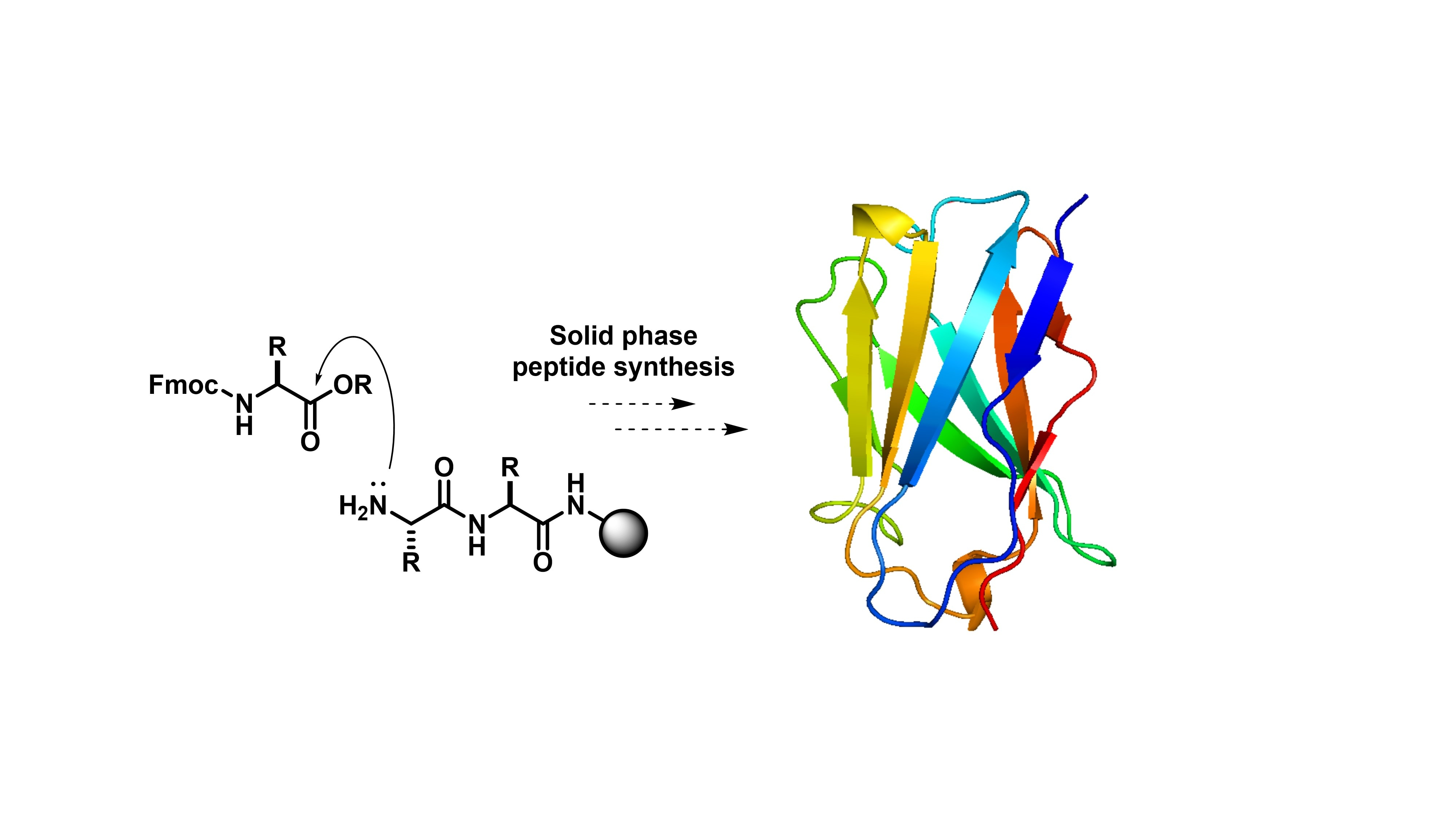Diagram of Solid phase peptide synthesis