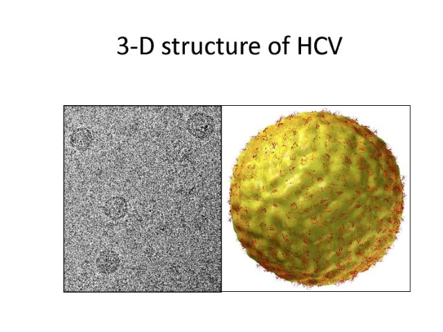 Photo of 3-D structure of HCV