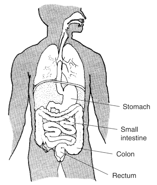 Illustration of the digestive system with stomach, small intestine, colon, and rectum labeled.