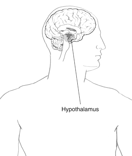 Illustration of the brain with the hypothalamus highlighted and labeled.