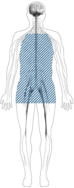 Illustration of the nervous system inside of the human body that has blue dash marks in the middle section of the person.