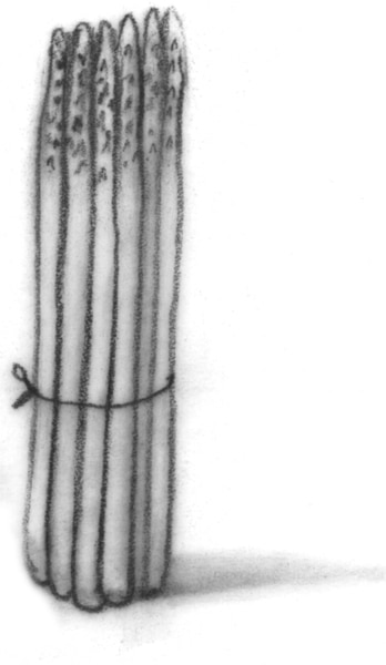 Drawing of asparagus.
