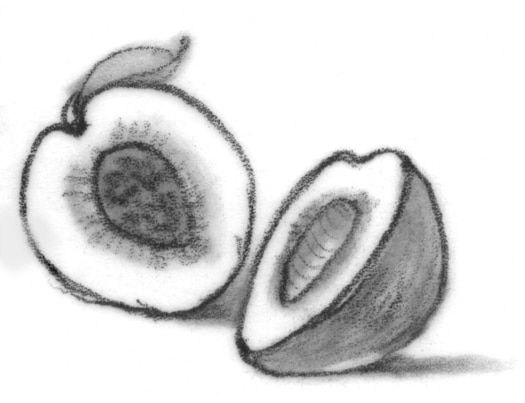 Drawing of a peach.