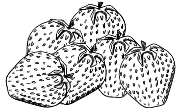 Drawing of strawberries.