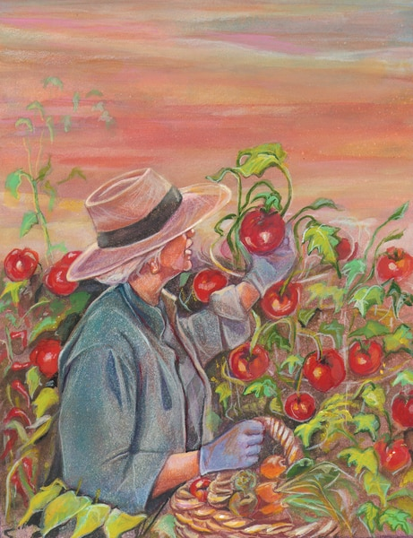 Drawing of a woman wearing a hat and  picking tomatoes off a vine.