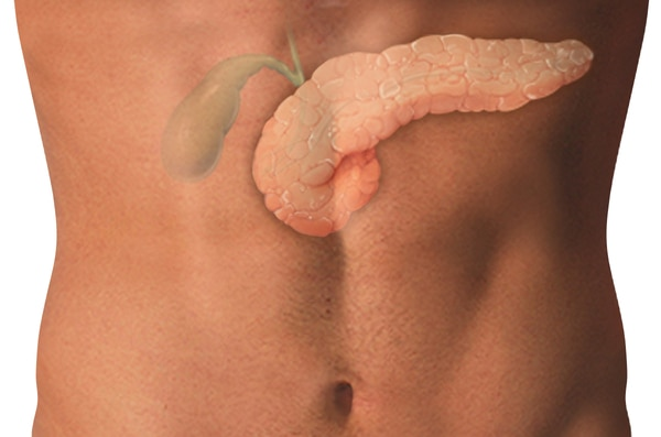 Photograph of torso with the pancreas and gallbladder.  The pancreas is irregular in appearance and extends to the left side of the abdomen. The gallbladder is above the pancreas and is the smaller of the two structures. The bile ducts are the tubes leadi