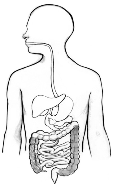 Drawing of the gastrointestinal tract with the ascending colon and the descending colon highlighted.