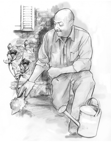 Drawing of a man kneeling while digging in the dirt in his rose garden.