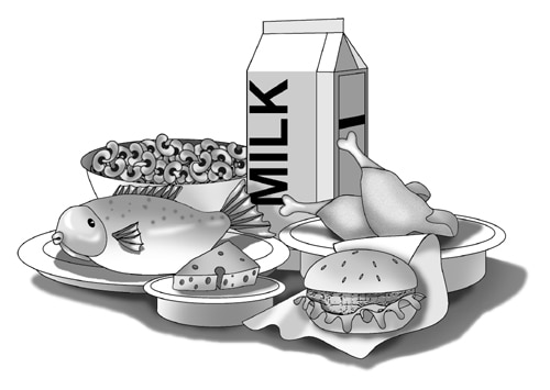 Drawing of a bowl of dried beans, a fish on a plate, a carton of milk, a wedge of cheese, a hamburger sandwich, and two chicken drumsticks.