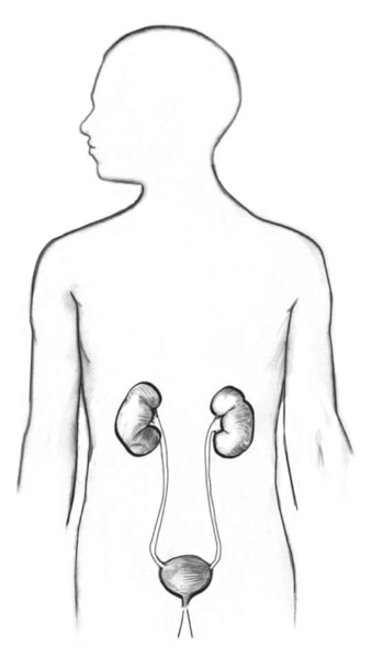 Drawing of the urinary tract in the outline of a male body.
