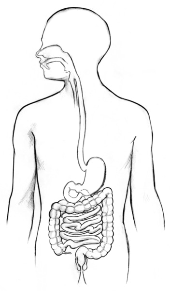 Drawing of the digestive tract in the outline of a male figure.