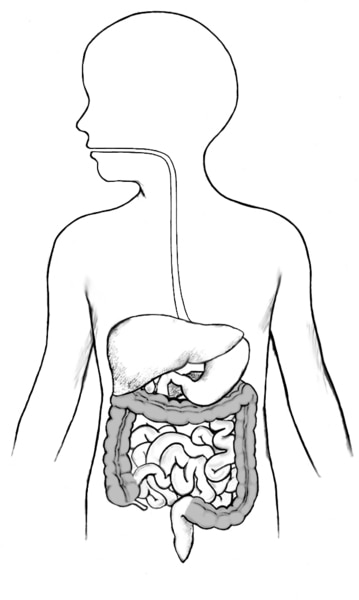 Drawing of the GI tract