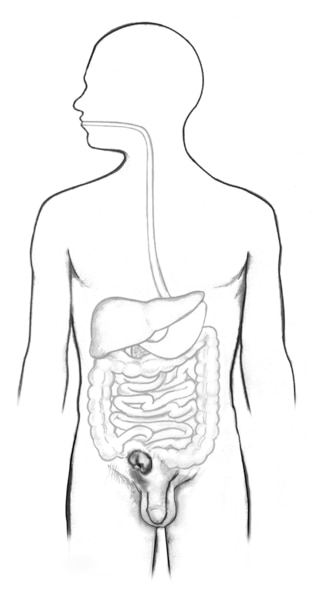 Drawing of the digestive tract within the outline of a male body.