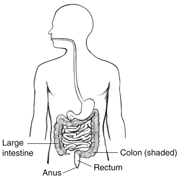 Drawing of the digestive tract within an outline of the human body with labels pointing to the large intestine, colon, rectum, and anus.