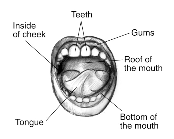 Drawing showing labels pointing to teeth, gums, roof of the mouth, bottom of the mouth, tongue, and inside of cheek.